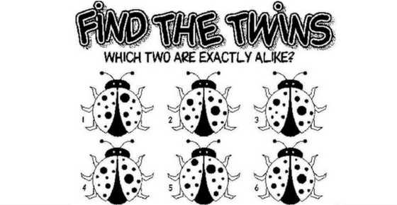 find-the-twins