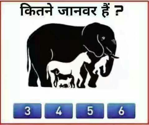 how many animals do you see