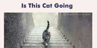 Is this cat going up or down