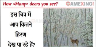 How Many Deer You See answer
