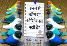 इनमे से कौन सा ओरिजिनल पक्षी है?